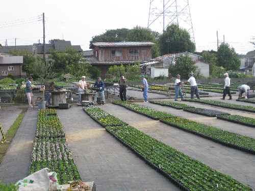リレー栽培2010.10.5.JPG
