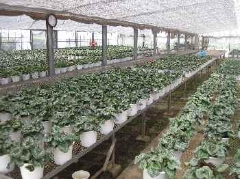 農場の様子2010.8.23③.JPG