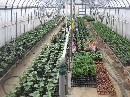 農場の様子2011.4.24②.JPG