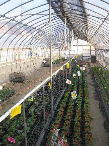 農場の様子2011.4.24⑦.JPG