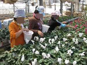 農業体験学習2010.7.24⑧.JPG