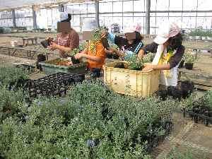 農業体験学習2010.7.24⑩.JPG