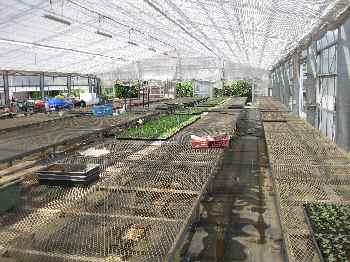 農場の様子2010.8.23②.JPG