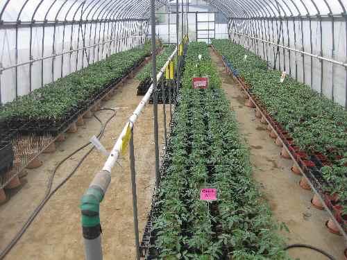 農場の様子2011.4.24①.JPG