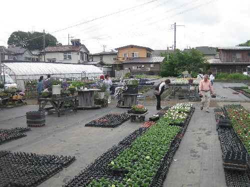 農場の様子2011.6.5②.JPG