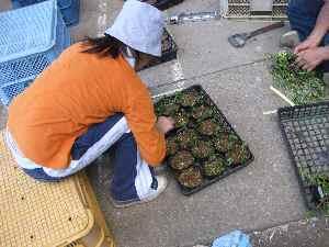 農業体験学習2010.7.24⑪.JPG